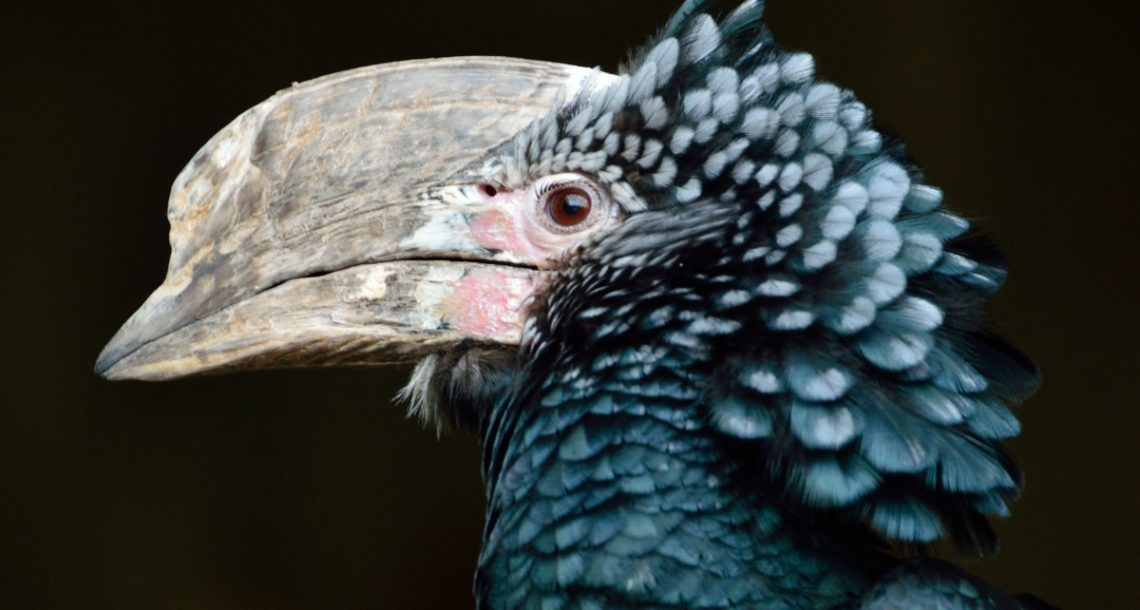 Delays in wildlife trade bans are placing hundreds of species at risk of extinction