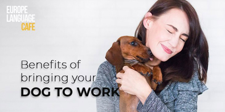 What Are The Benefits of Bringing Your Dog To Work For Employees AND For Company's