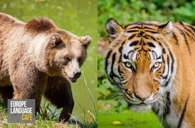 Geography Quiz: European Wildlife