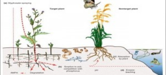 glyphosateplantillustration