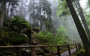 Black Forest and Bavaria