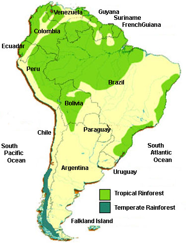 Image result for the amazon rainforest south america