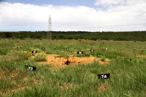 "Numbered, metal plates mark the spot of pauper's graves at Elandsfontein cemetery. The ""paupers"" -- unclaimed and unidentified bodies -- are buried three to a grave, some sunken and exposed to the elements with time."