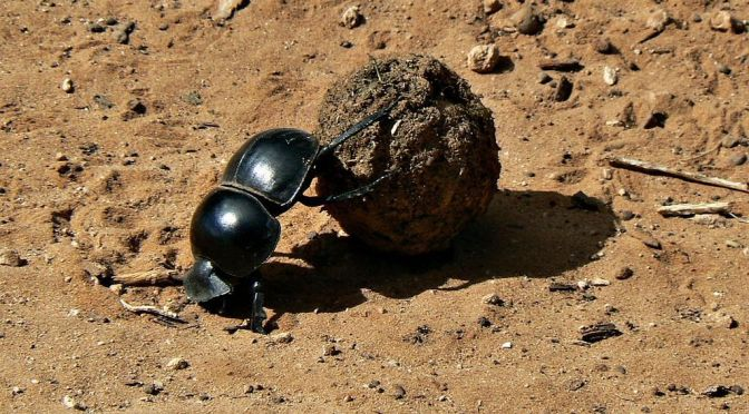 The Poetry of Science – Episode 4: The Dance of the Dung Beetle