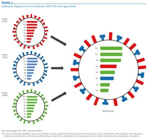 Avian Flu Diary: PNAS: Evolution Of H9N2 And It's Effect