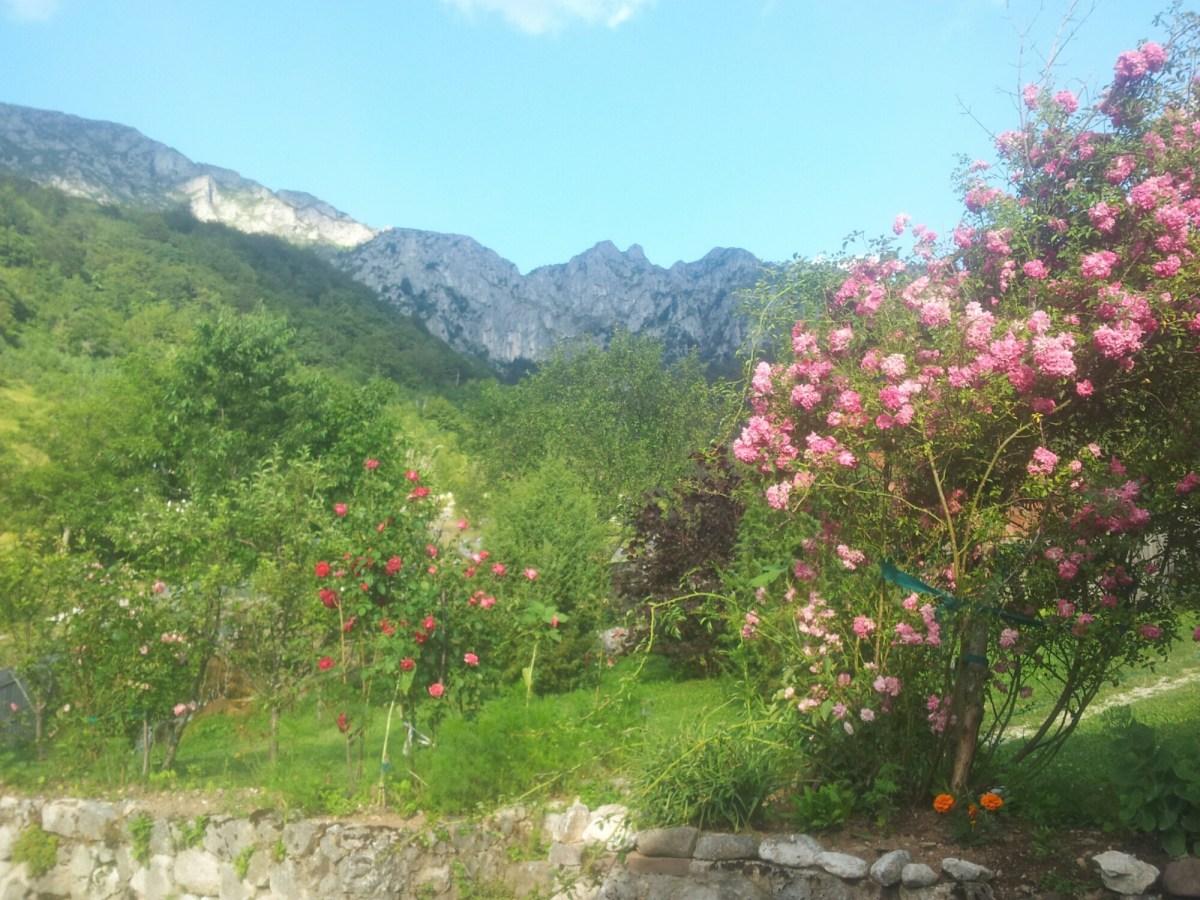 Treskavica met roze bloemen ervoor