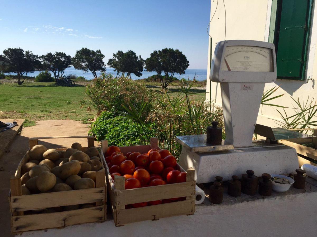 local-market-veli-rat-dugi-otok-croatia