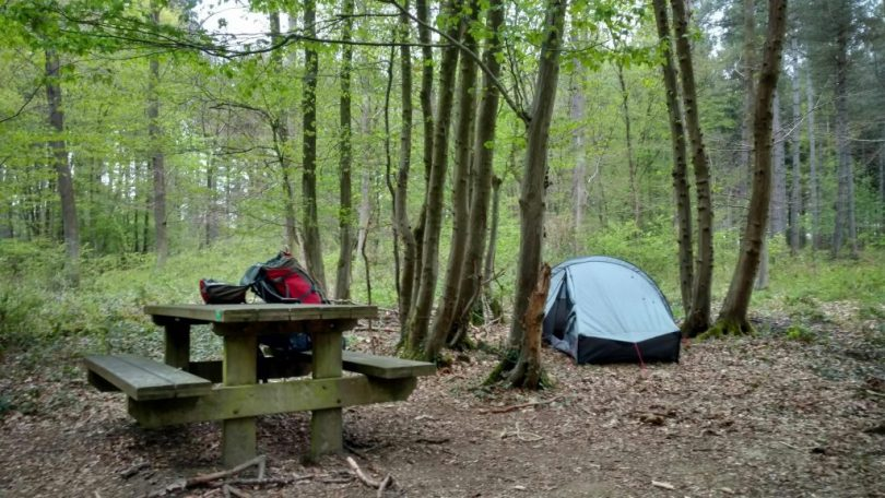 Woody_Wild_Camp_wallonia_gr57