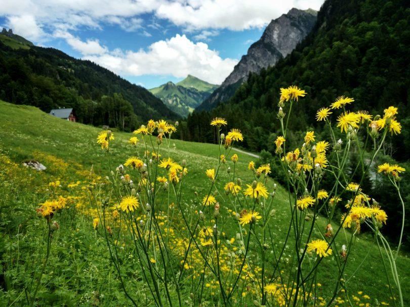 Voralberg_Buchboden_via_alpina