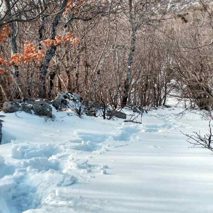3 Hour snowshoe hike from Babrovača to Planinarski dom Zavižan