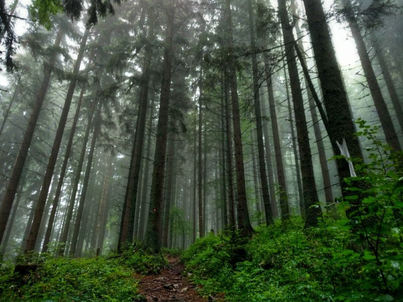 A walk in the woods, Trebević
