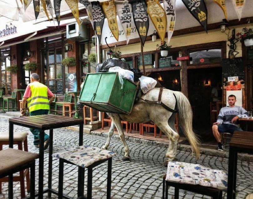 Sightseeing Prizren | Garbage horse