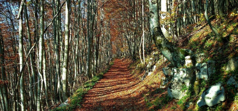 Met de verwarde cavia over een bospad