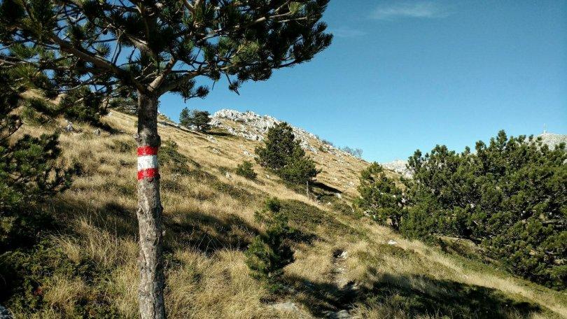 Biokovo Hiking Trail: Trees