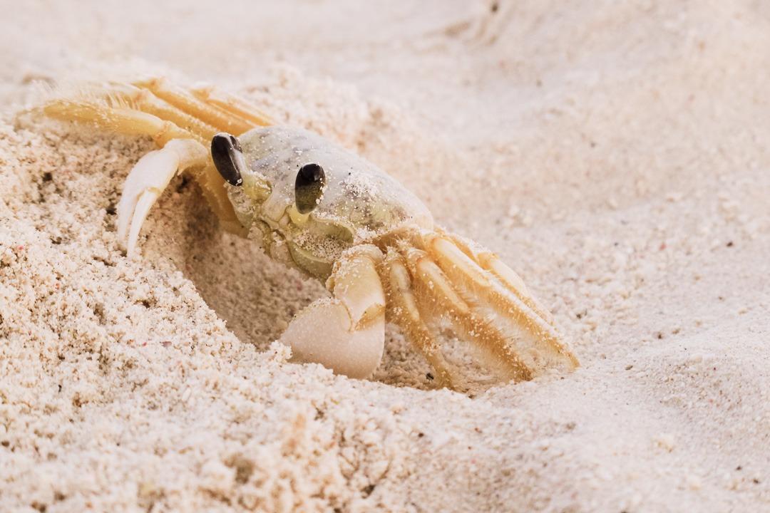 Aruba crab on the beach