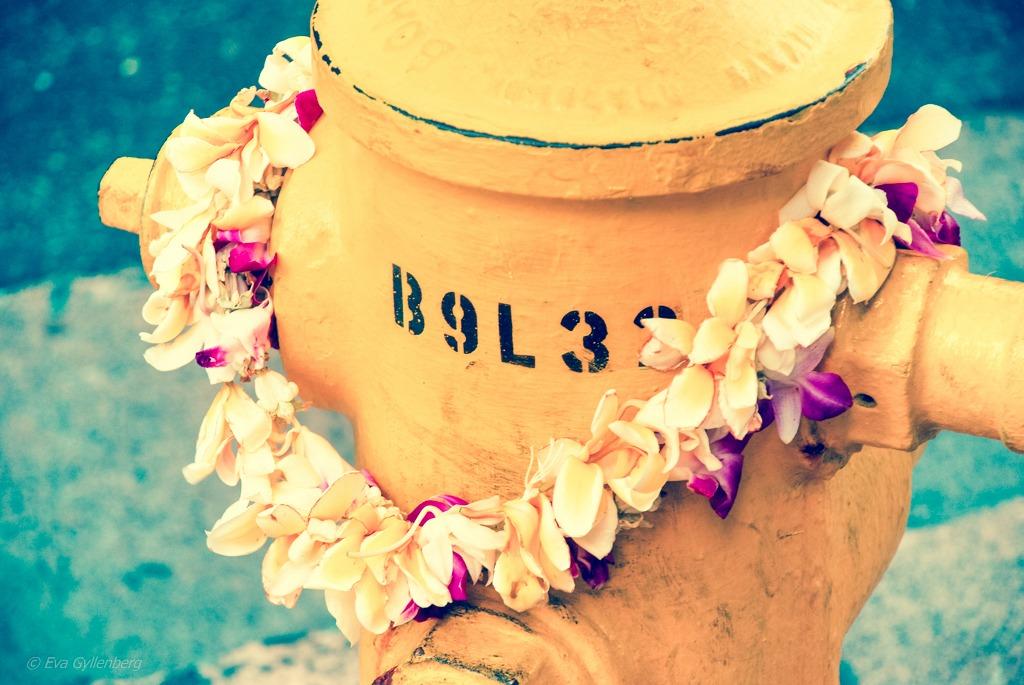 Lei - Oahu - Hawaii