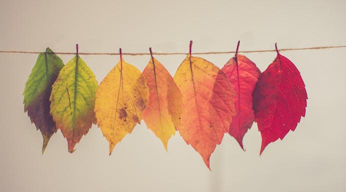 colore delle foglie