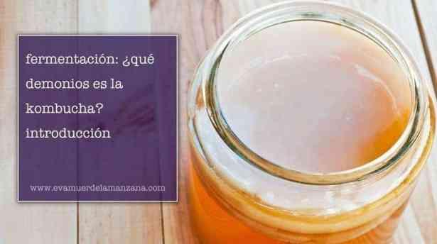 Introducción a la kombucha, bebida fermentada