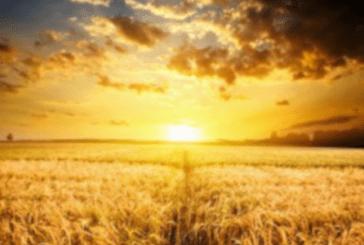 El reino, la semilla y sus frutos: Mc 4, 26-34.
