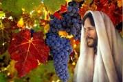 Evangelio San Juan 15,1-8. Miércoles 5 de Mayo de 2021.