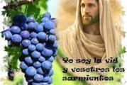 Evangelio San Juan 15,1-8. Domingo 2 de Mayo de 2021.
