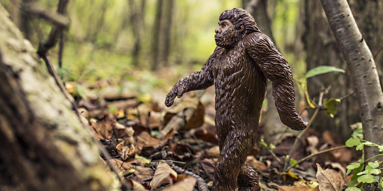 divergent evolution from evolutionary advantage