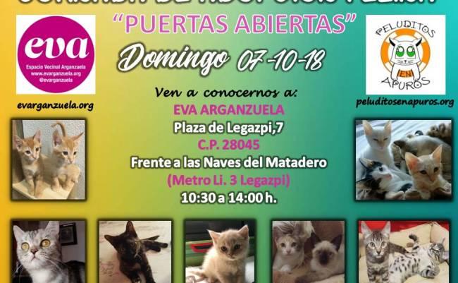 El próximo domingo 7 de octubre tenemos nuevamente una jornada de #adopción felina en #eva, a cargo de @peluditosapuros, protectora felina sin ánimo de lucro ubicada en Madrid.