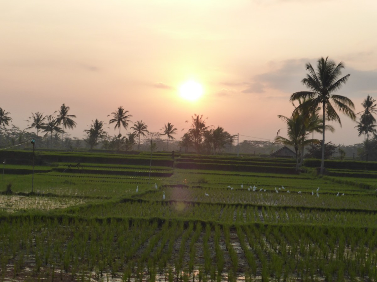 Ubud, la culture et la magie de Bali