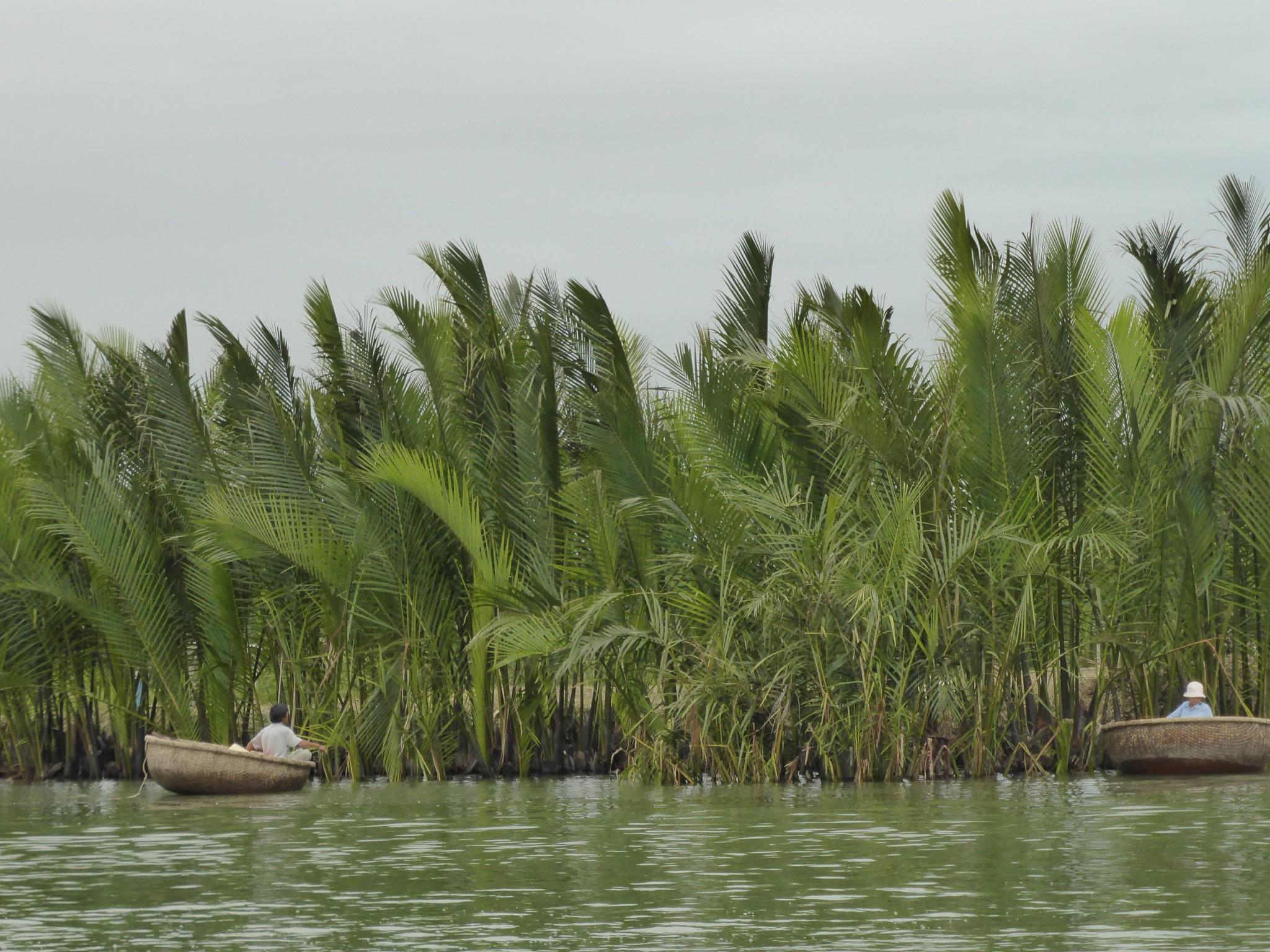 Mangrove Cam Thanh Hoi An