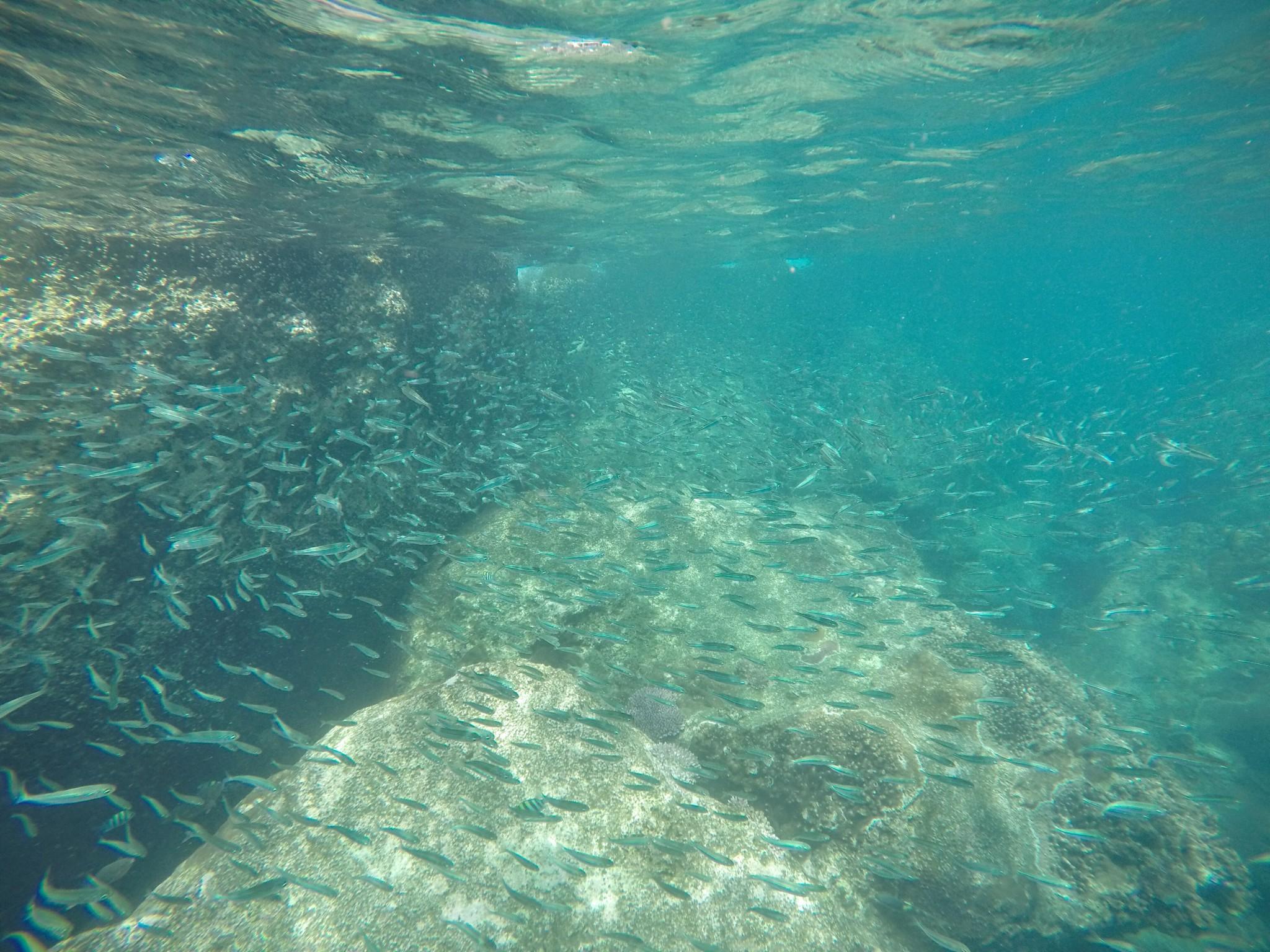 snorkeling poisson tioman