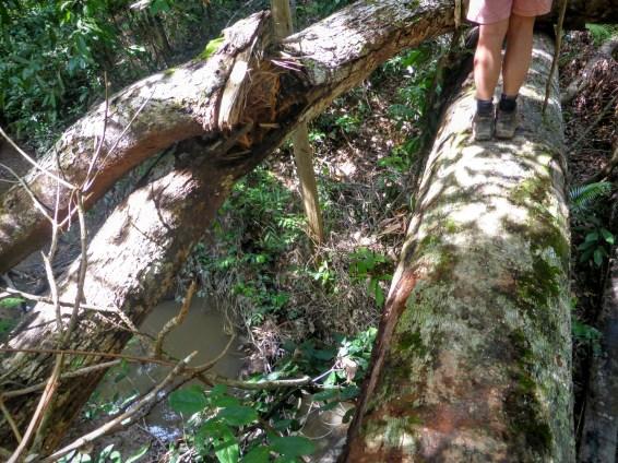 Traversée de rivière sur un tronc d'arbre