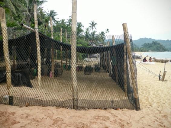 turtle project juara tioman