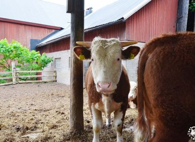 Morby Gard Farm