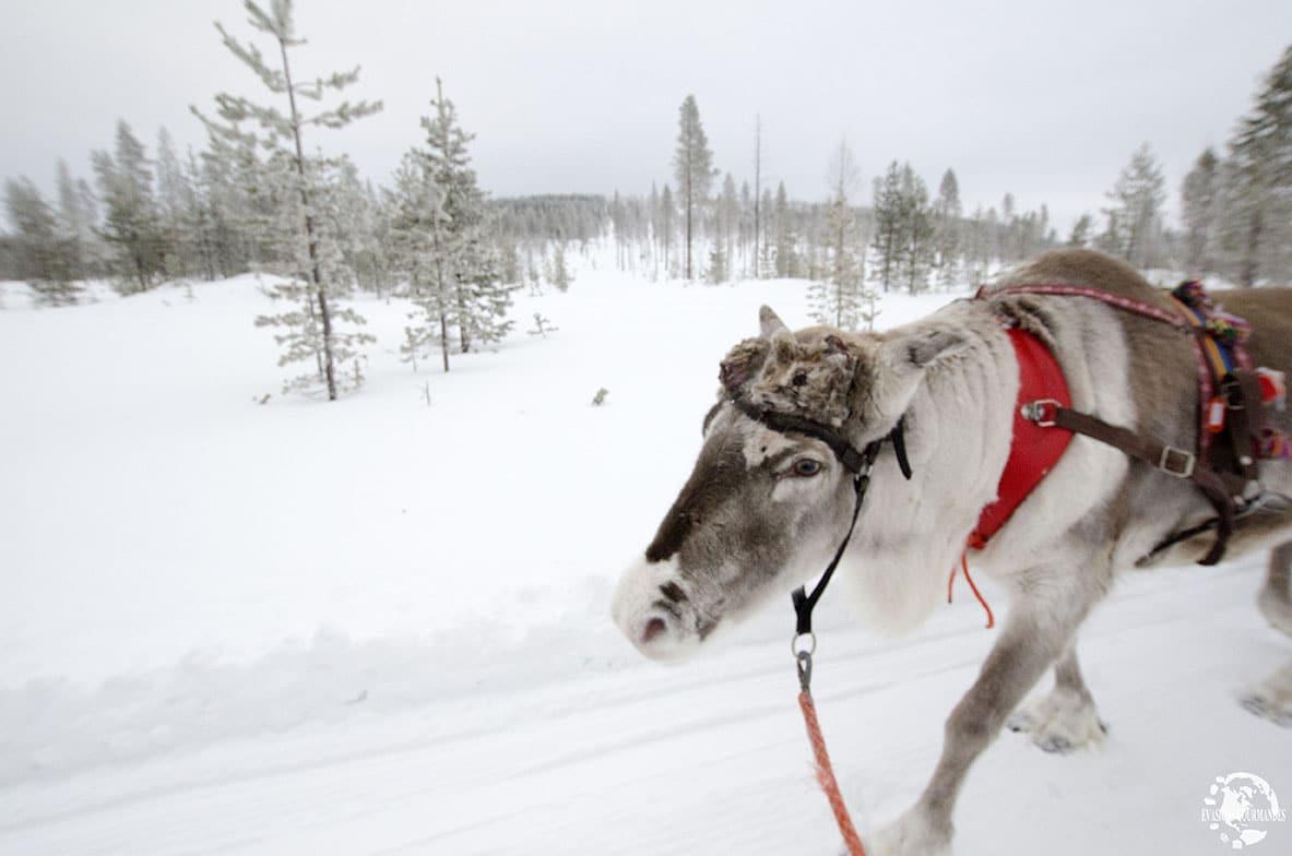 Ferme de rennes
