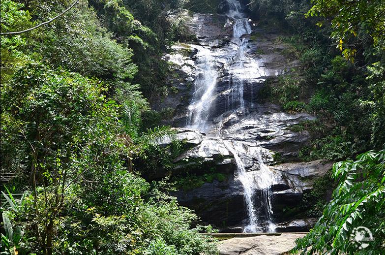 Forêt Tijuca