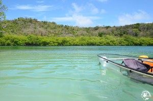 Kayak Martinique mangrove