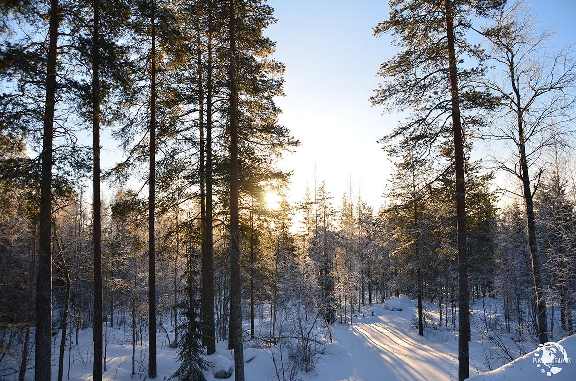 Ranua, Laponie