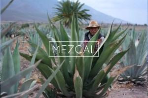 Comment boire le Mezcal