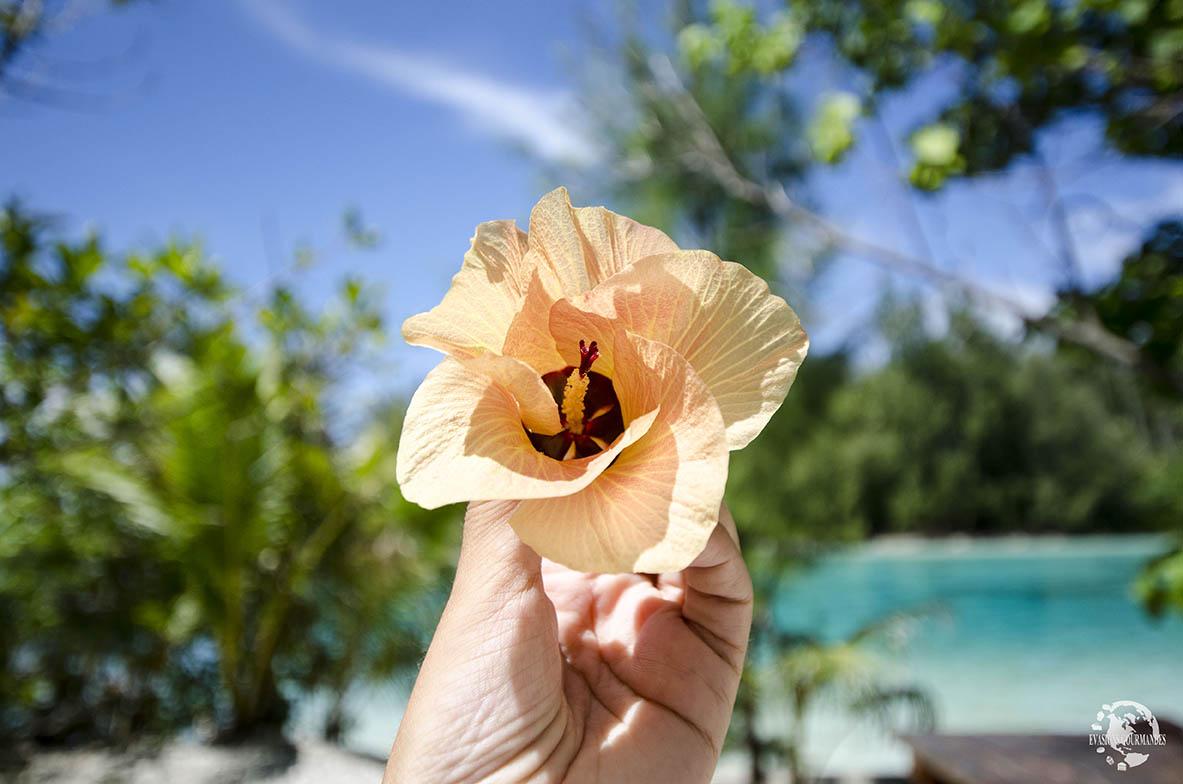 Fleur de Pureau