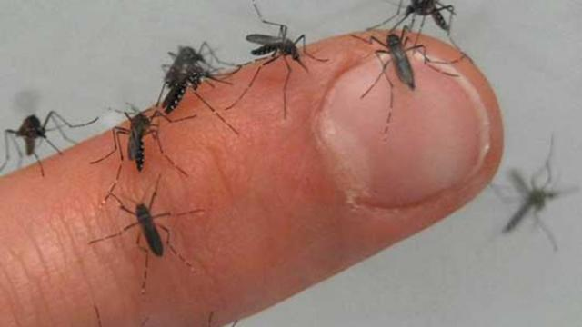 dengue_invasion-Rainy-Season-Disease-In-Nigeria