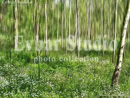 Весенний лес, фото обои фон заставка картинка тема ...
