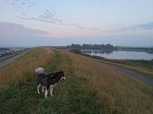 wandeling-2016-10-26-18-29-35-klein