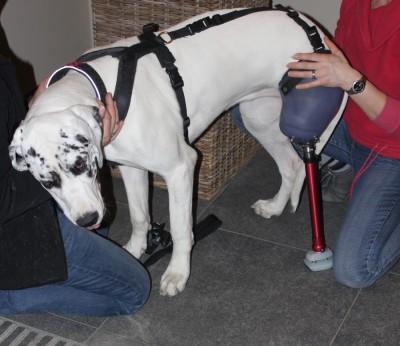 16_Futur - Les animaux handicapés retrouveront leur joie de vivre grâce à des prothèses conçues sur mesure..?!