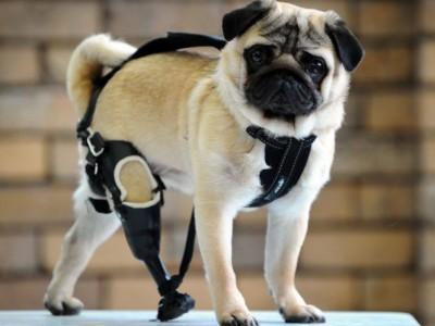 20_Futur - Les animaux handicapés retrouveront leur joie de vivre grâce à des prothèses conçues sur mesure..?!