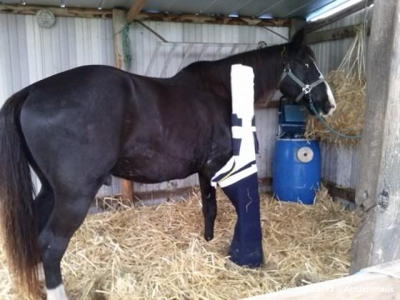 21_Futur - Les animaux handicapés retrouveront leur joie de vivre grâce à des prothèses conçues sur mesure..?!