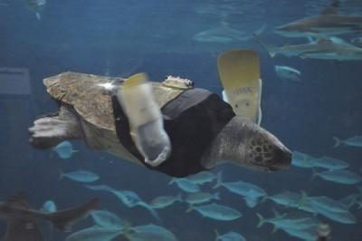 3_Futur - Les animaux handicapés retrouveront leur joie de vivre grâce à des prothèses conçues sur mesure..?!