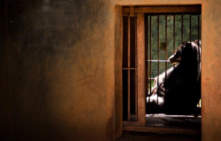 3_Animal - La souffrance des animaux de zoo capturée à travers le monde