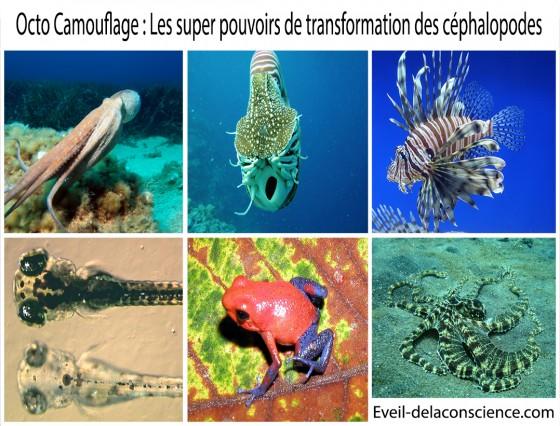 1_Octo Camouflage – les super-pouvoirs de transformation des céphalopodes
