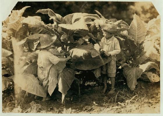 8_Garçons de 4 et 6 ans nettoyant des feuilles de tabac dans le Kentucky