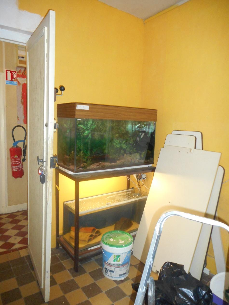 Aquariophilie Du Foyer Rural Eveil De Sarry